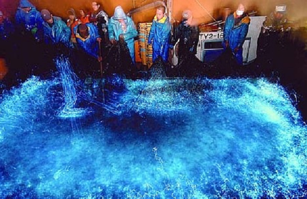 Experiência: Assistir ao espetáculo das lulas vaga-lumes na Baía de Toyama no Japão