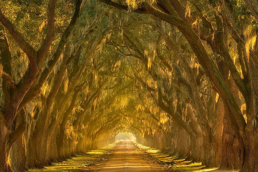 Bem-vindo aos 20 túneis de árvores mais mágicos para você dar uma caminhada antes de morrer. Sério, eles existem.