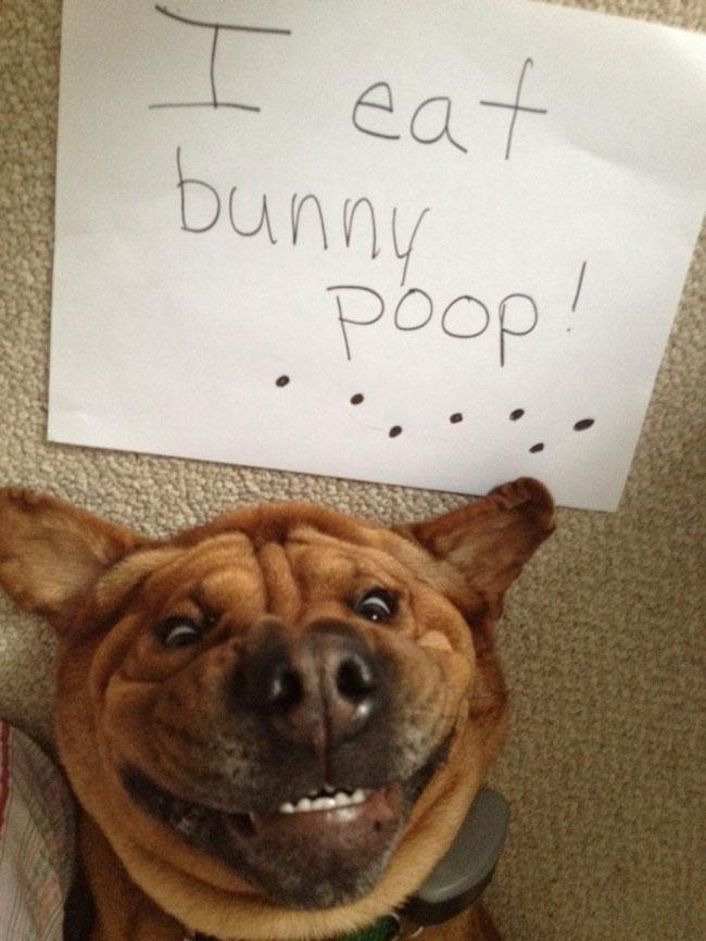 30 Cães Extremamente Bagunceiros: Você Vai Cair Na Gargalhada Quando Descobrir O Que Eles Fizeram