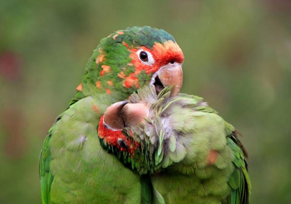 48 Deslumbrantes Fotos Em Alta Definição De Animais Na Natureza