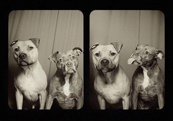 Aqui Está O Que Acontece Quando Você Coloca Cães Em Uma Cabine De Fotografia. Dica: É Fantástico!