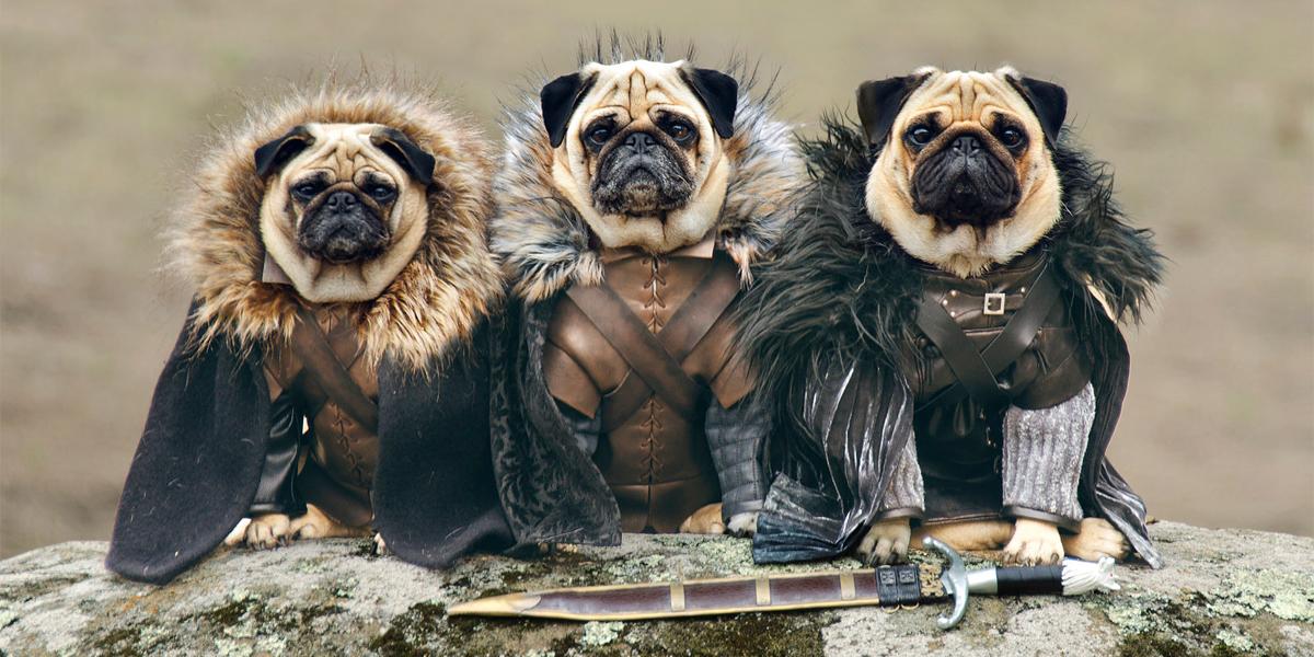 Os Cães De Westeros: 3 Cães Da Raça Pug Reencenam O Seriado Game Of Thrones