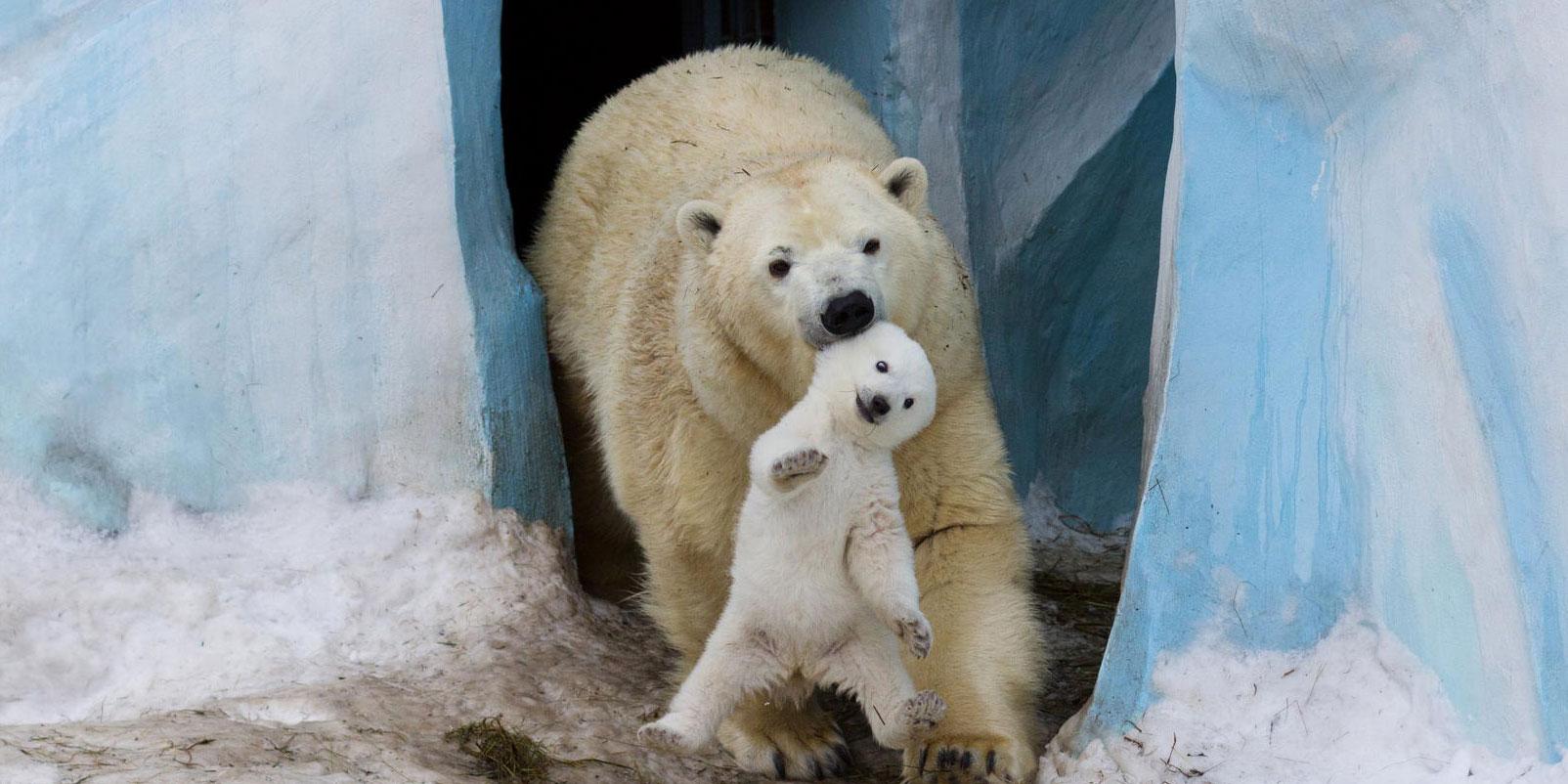 """25 Dos Momentos Mais Bonitos Entre """"Pais E Filhos"""" No Reino Animal"""