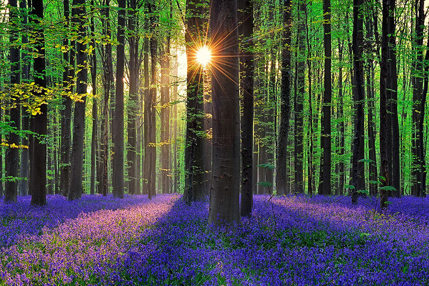 Quase Ninguém Conhece Esta Mística Floresta. Estou Encantado Com Estas Fotos!
