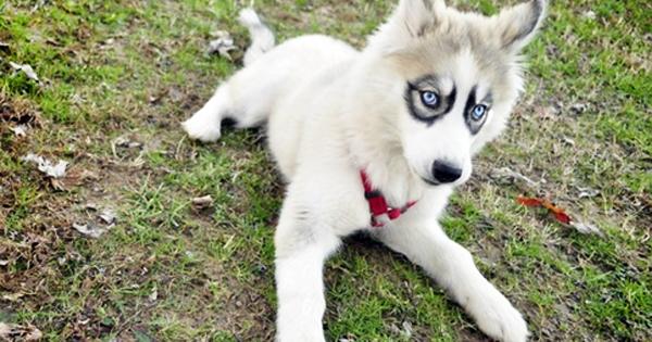 Estes 19 Cães São Diferentes De Qualquer Outro Cão Que Já Vi. Eu Quero Todos!