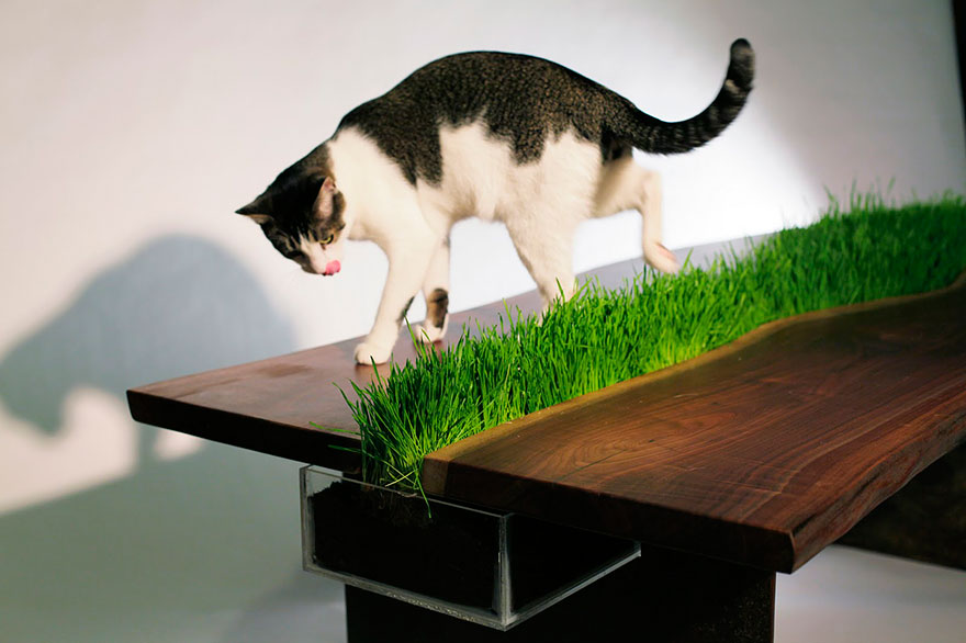 moveis-para-gatos-21