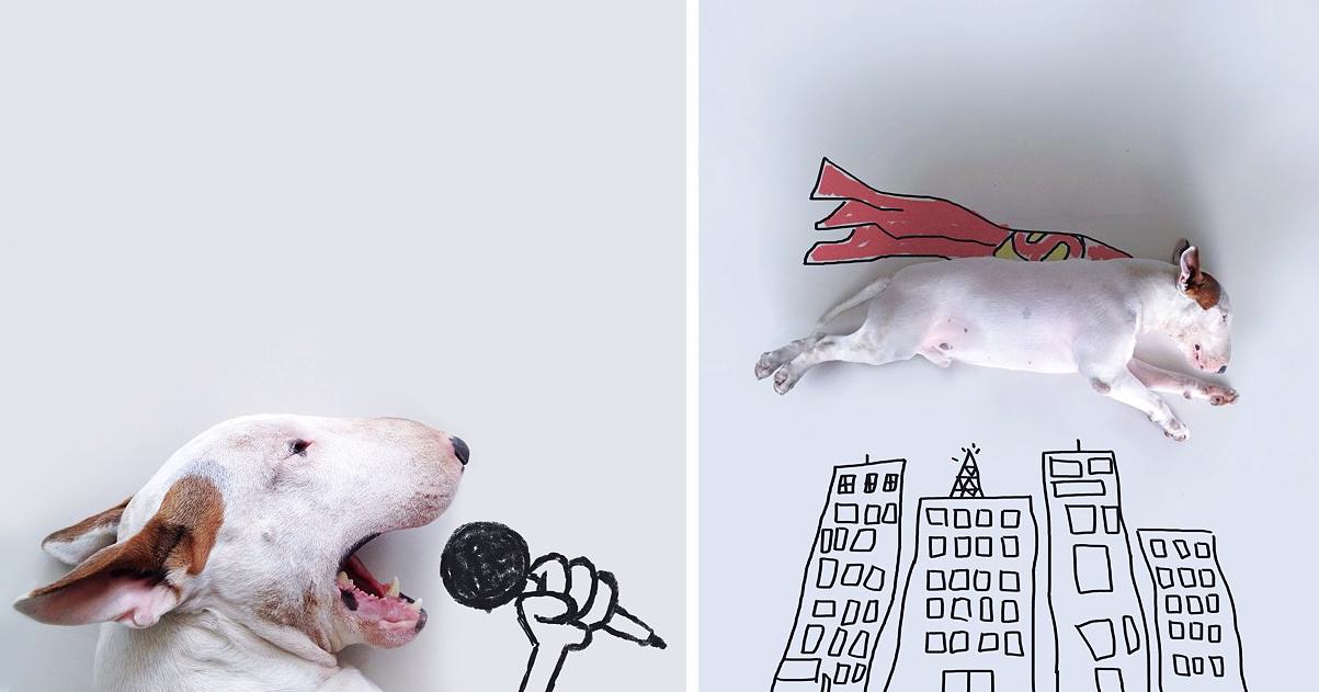 Dono De Cão Cria Ilustrações Divertidas Com Seu Bull Terrier