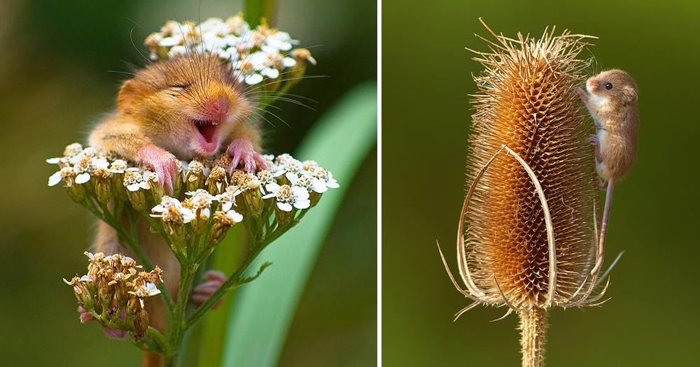 28 Pequeninos Ratinhos Selvagens