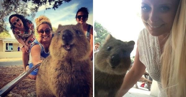 As Pessoas Começaram A Tirar Selfies Com Um Pequeno Roedor Da Austrália. As Fotos Ficaram Hilárias.