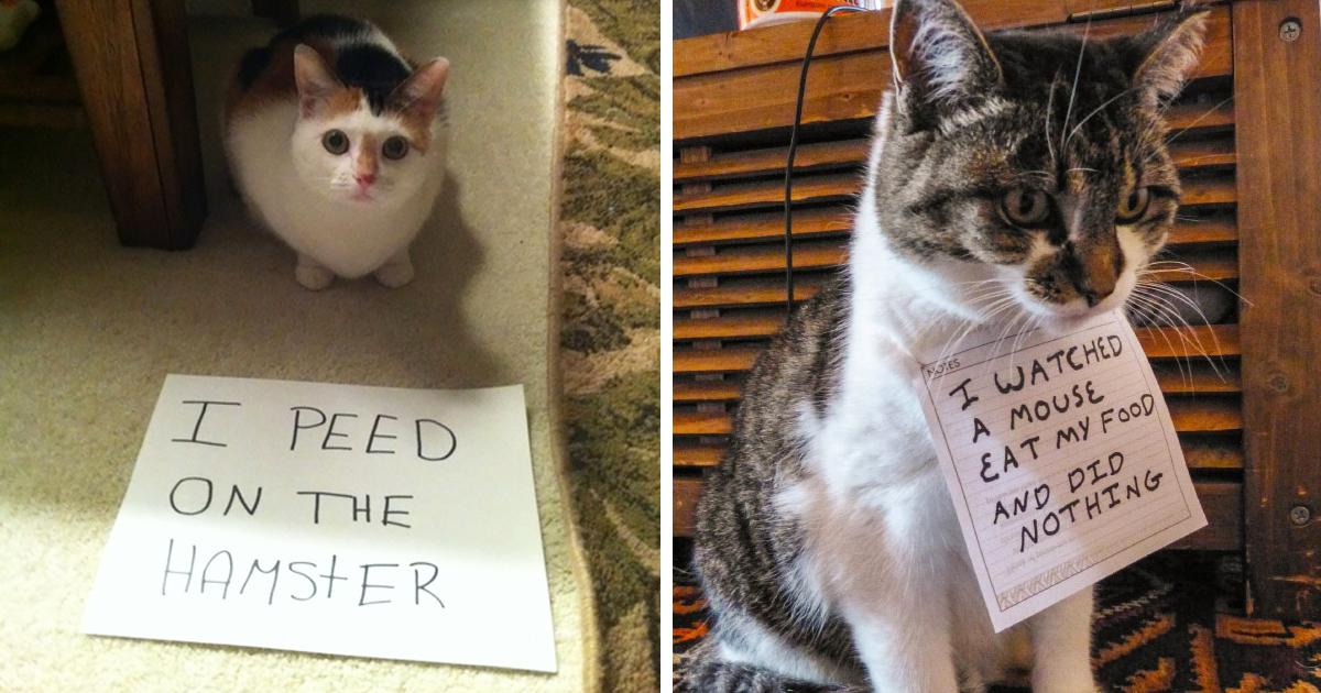 15 Gatos Com Vergonha Por Seus Crimes