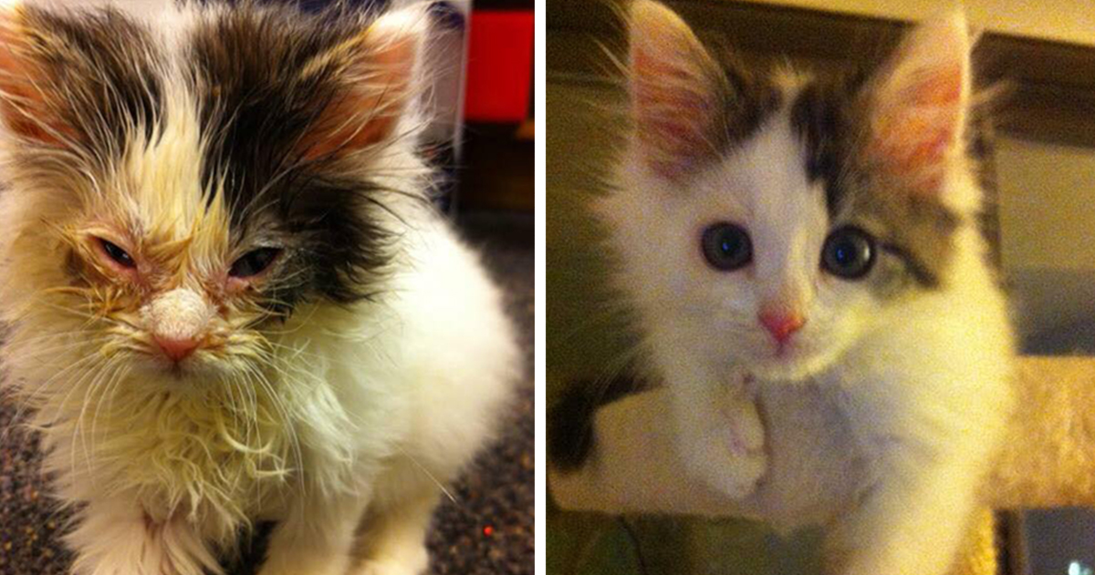 15 Fotos Que Mostram Como A Adoção Pode Salvar A Vida De Um Gato.