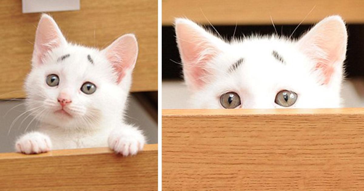 Conheça Gary: O Preocupado Gatinho Com Suas Sobrancelhas Permanentemente Arqueadas