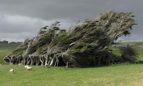 16 Árvores Majestosas Espalhadas Pelo Mundo