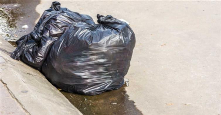 Um Saco De Lixo Começou A Se Mexer. O Que Tinha Lá Dentro Mudou Essa Família Para Sempre.
