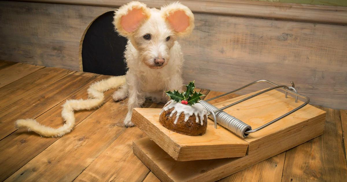 Este Fotógrafo Transforma Seu Cão Em Diferentes Animais Todo Natal