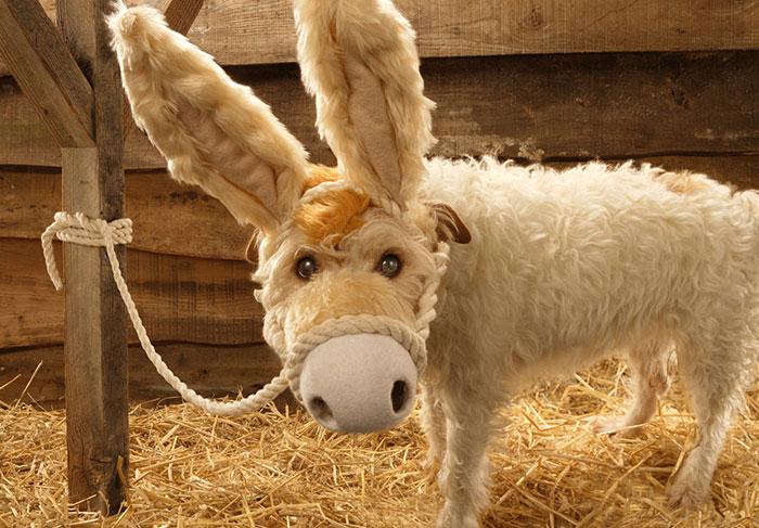 fotografo-transforma-seu-cao-em-diferentes-animais-no-natal-2