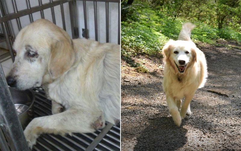 12 Fotos Do Antes E Depois De Cães Adotados Que Vão Aquecer Seu Coração Agora