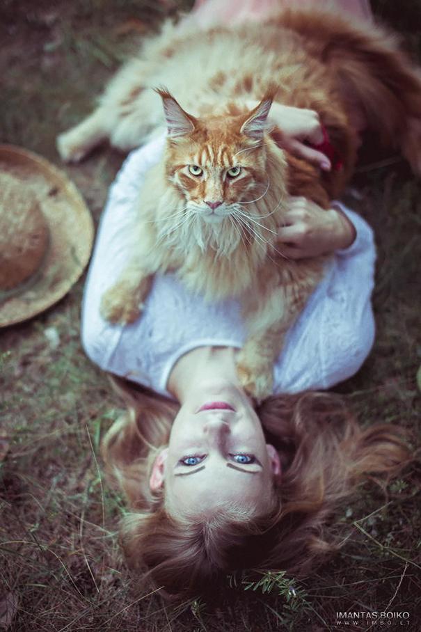 16-gatos-enormes-que-irao-fazer-o-seu-gato-parecer-minusculo-4