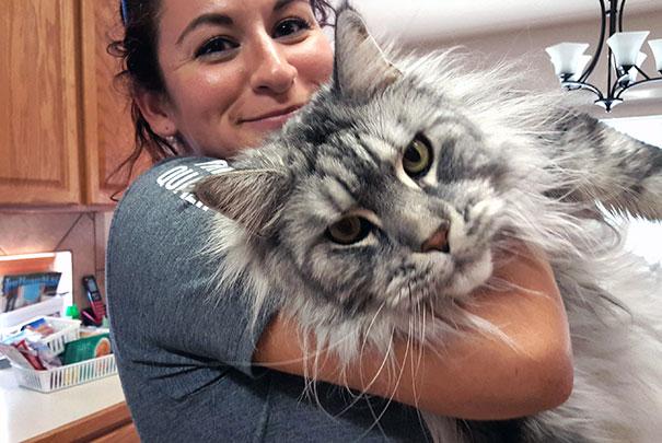 16-gatos-enormes-que-irao-fazer-o-seu-gato-parecer-minusculo-5