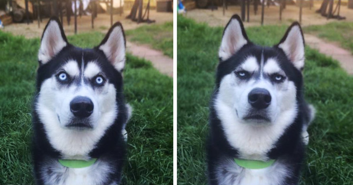 Jovem Finge Lançar Bola E Captura O Momento Exato Do Cão Quando Percebe Que Foi Traído