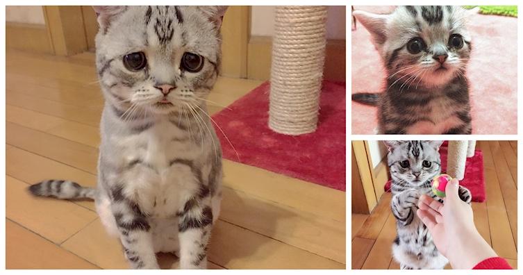 nova-sensacao-da-internet-o-gato-mais-triste-do-mundo-1