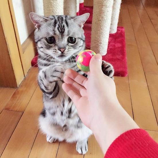 nova-sensacao-da-internet-o-gato-mais-triste-do-mundo-10