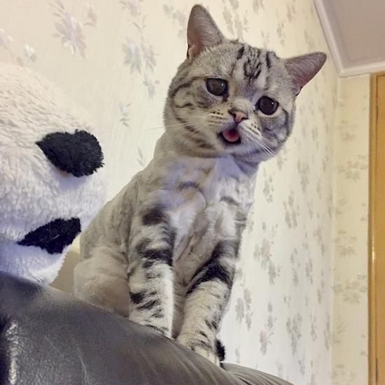 nova-sensacao-da-internet-o-gato-mais-triste-do-mundo-13