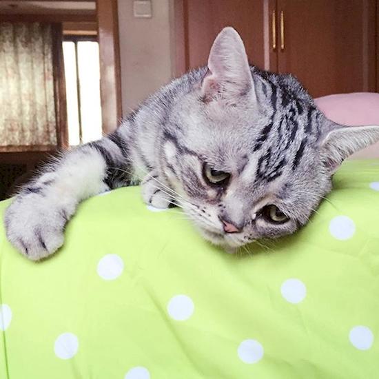 nova-sensacao-da-internet-o-gato-mais-triste-do-mundo-3