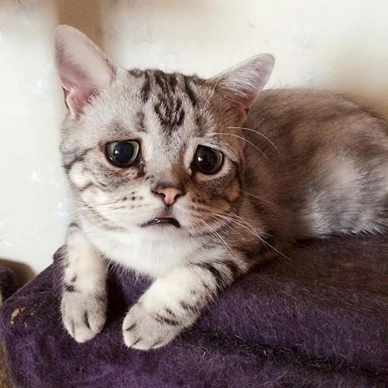 nova-sensacao-da-internet-o-gato-mais-triste-do-mundo-4