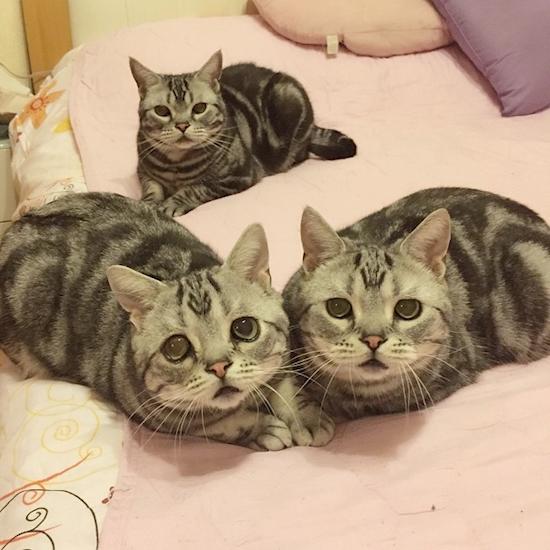 nova-sensacao-da-internet-o-gato-mais-triste-do-mundo-6