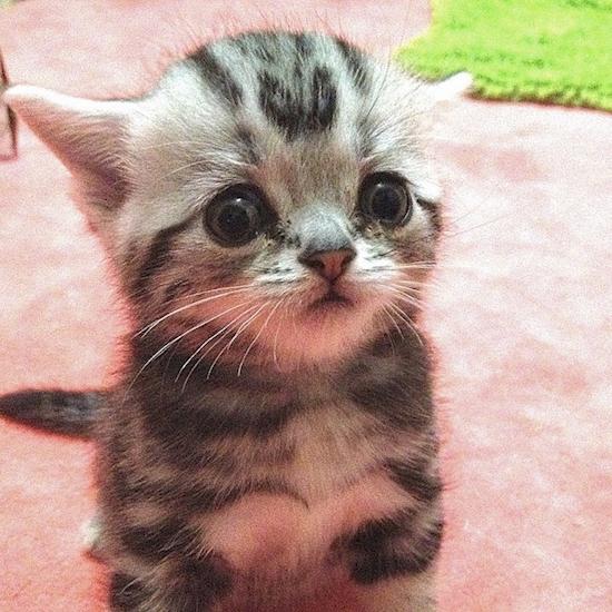 nova-sensacao-da-internet-o-gato-mais-triste-do-mundo-7
