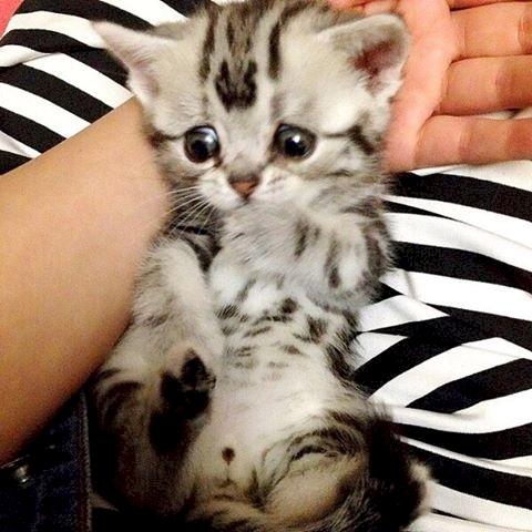nova-sensacao-da-internet-o-gato-mais-triste-do-mundo-8