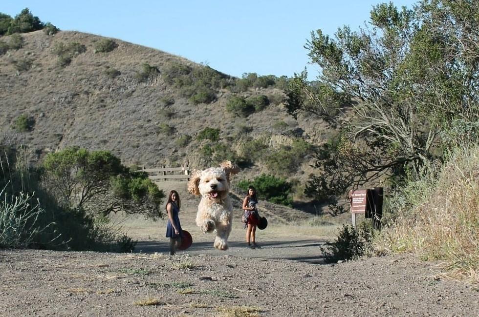 15 Fotos Tiradas No Momento Perfeito Fazem Cães Parecerem Gigantes