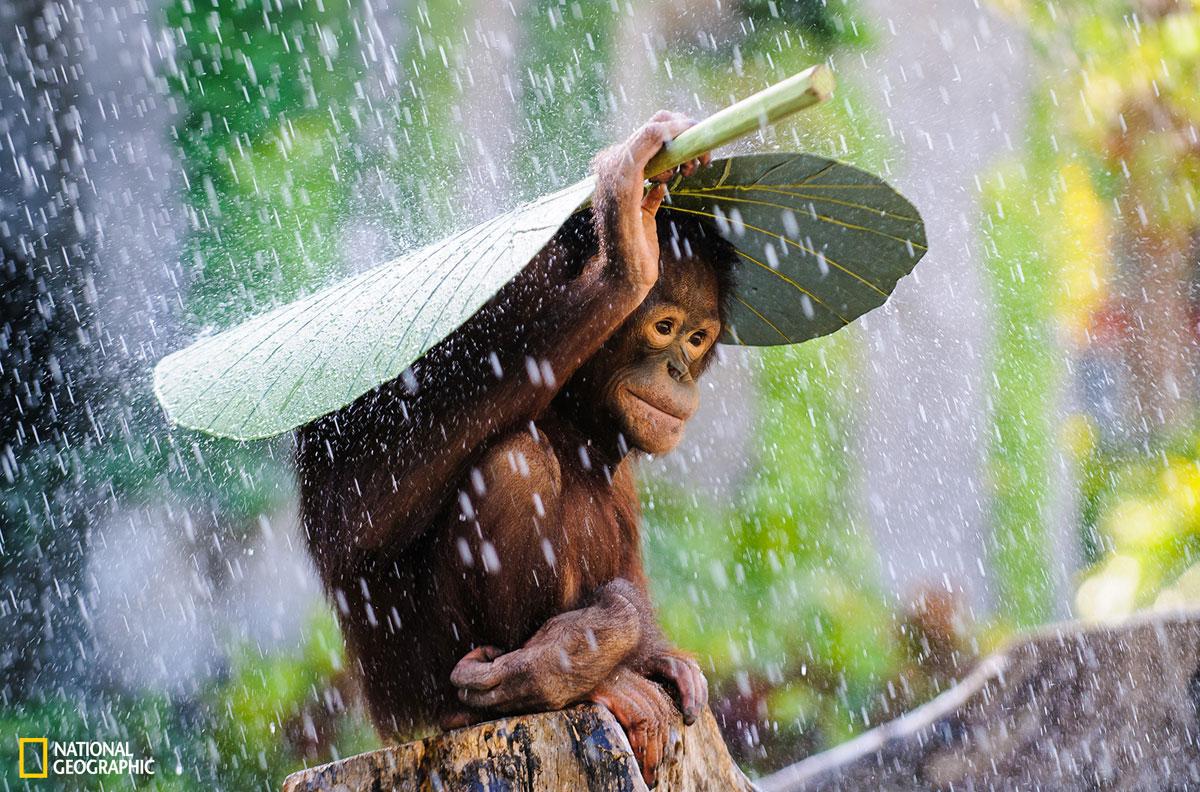 Saíram As 13 Fotos Vencedoras Do Concurso De Fotografia Da National Geographic De 2015