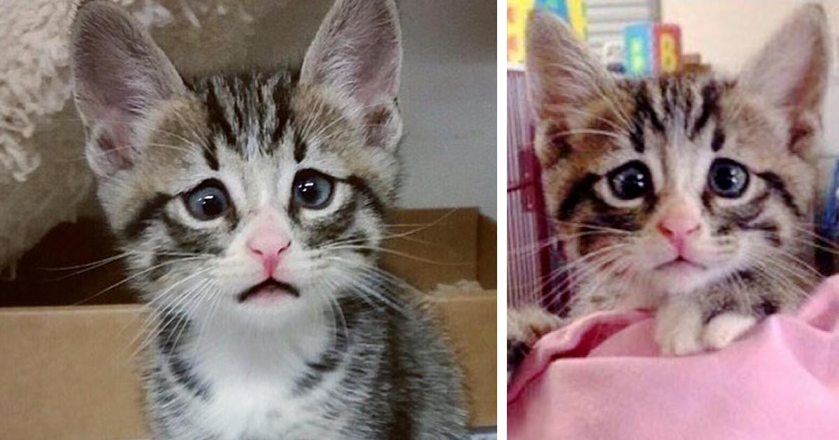Este Gatinho Com Olhos Preocupados É A Coisa Mais Fofa Da Semana