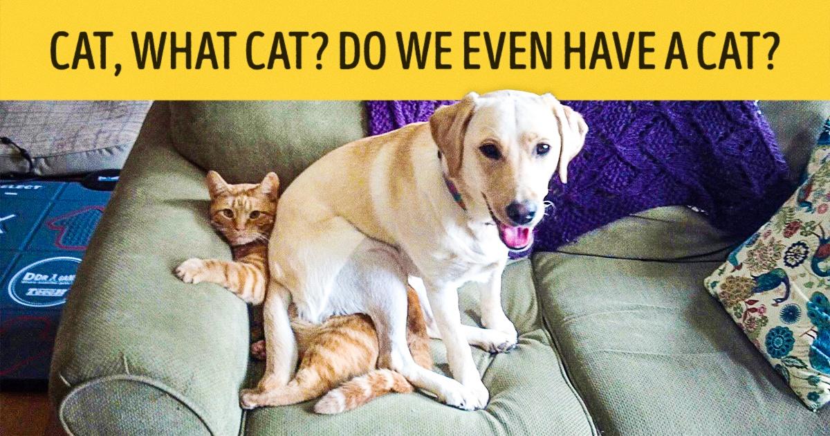 Estes 15 Cães Divertidos Desafiaram Toda A Lógica Canina. Você Vai Rir Muito Destas Fotos.