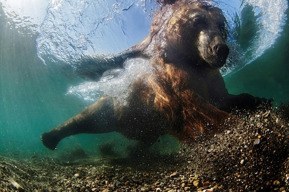 Saíram As Fotos Vencedoras Do Concurso De Fotografia Subaquática De 2016