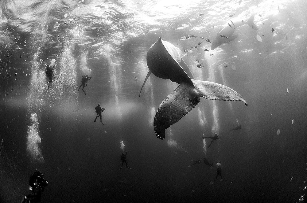 Saíram As Fotos Vencedoras Do Concurso World Press Photo De 2016