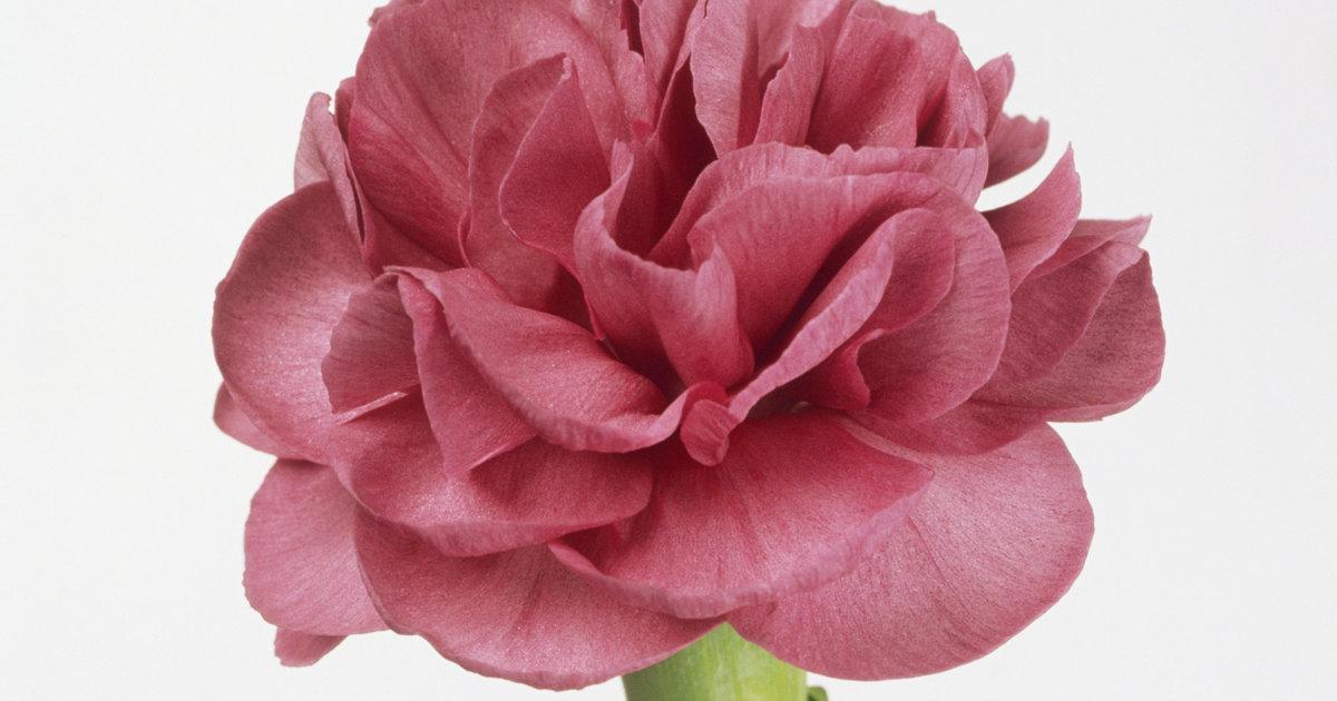 Todas As Garotas Desta Escola Ganharam Uma Flor No Dia Dos Namorados