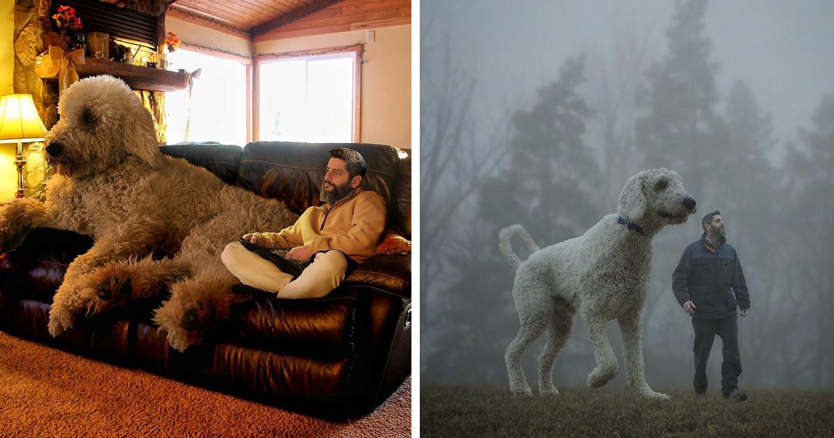Fotógrafo Transforma Seu Cão Em Um Gigante No Photoshop
