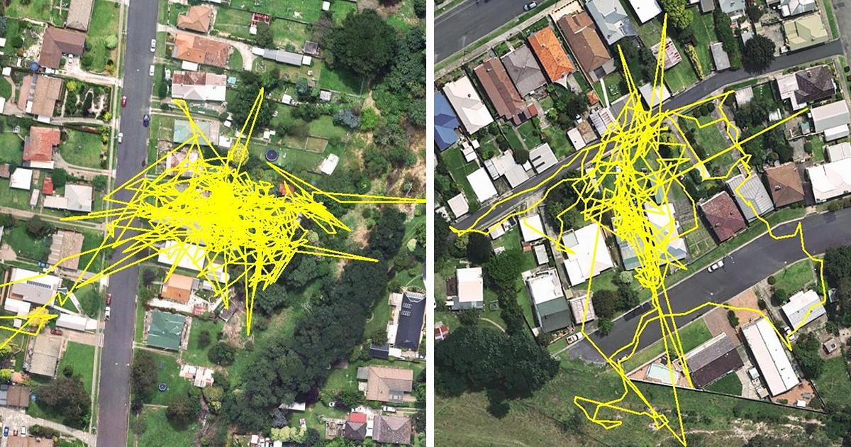 Rastreador GPS Revela As Aventuras Do Seu Gato Durante A Noite