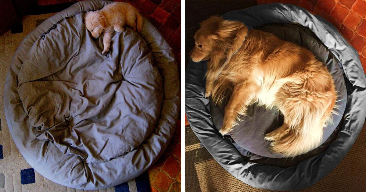 22 Fotos Do Antes E Depois De Cachorros Muito Fofos