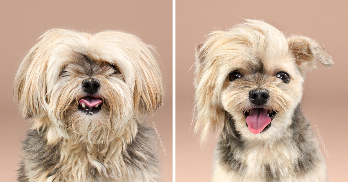 Veja O Antes E Depois De 7 Cães Que Decidiram Inovar Na Tosa. Eles Arrasaram!