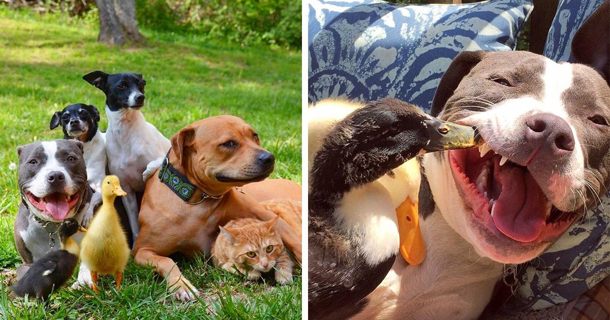 Este Casal Resgatou 7 Animais E É Assim Que Todos Eles Vivem Agora