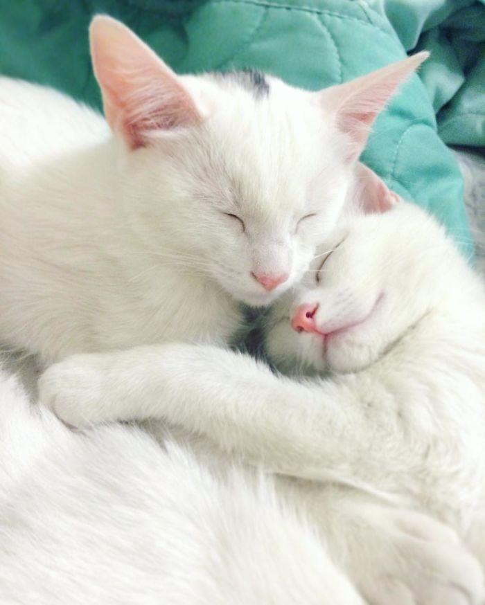gatos-gemeos-mais-bonitos-do-mundo-10