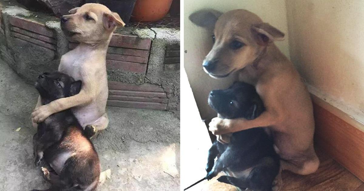 Cachorrinhos Abandonados Não Param De Se Abraçar Desde Que Foram Resgatados