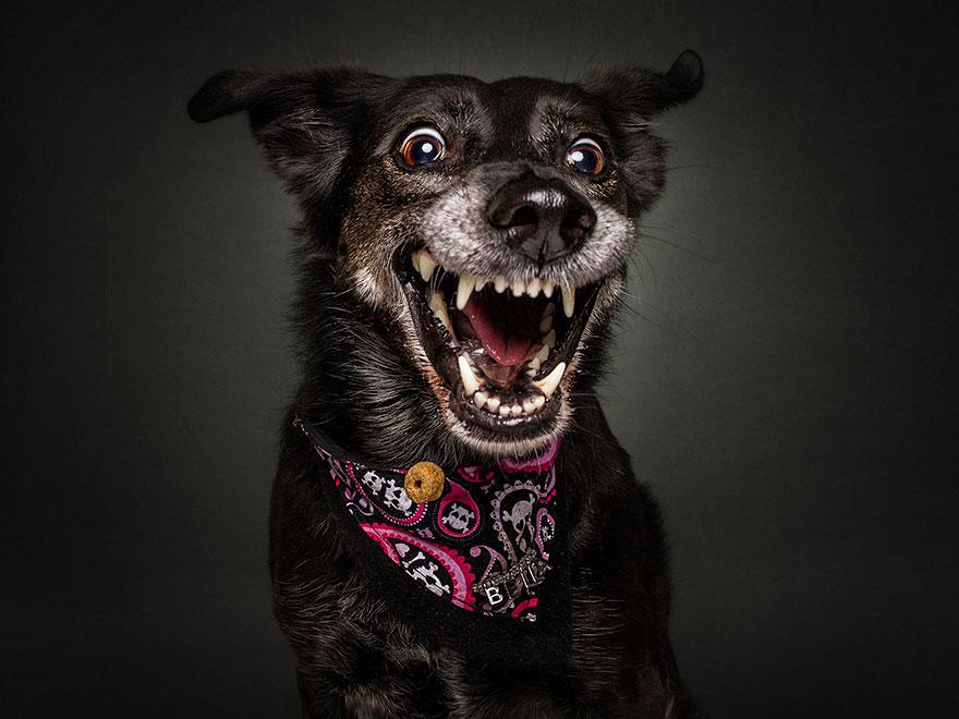 15 Expressões Hilárias De Cães Tentando Pegar Guloseimas No Ar