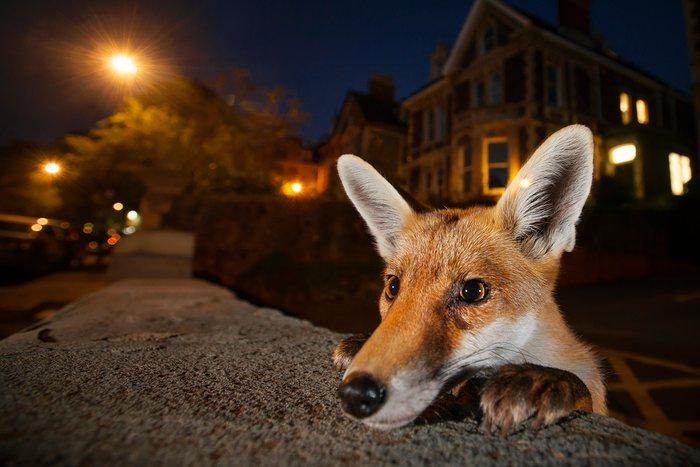 as-11-fotografias-finalistas-do-concurso-anual-de-fotografia-de-vida-selvagem-de-2016-1