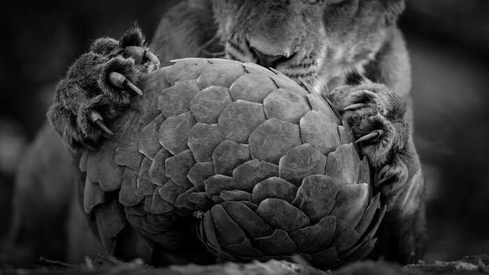 as-11-fotografias-finalistas-do-concurso-anual-de-fotografia-de-vida-selvagem-de-2016-3