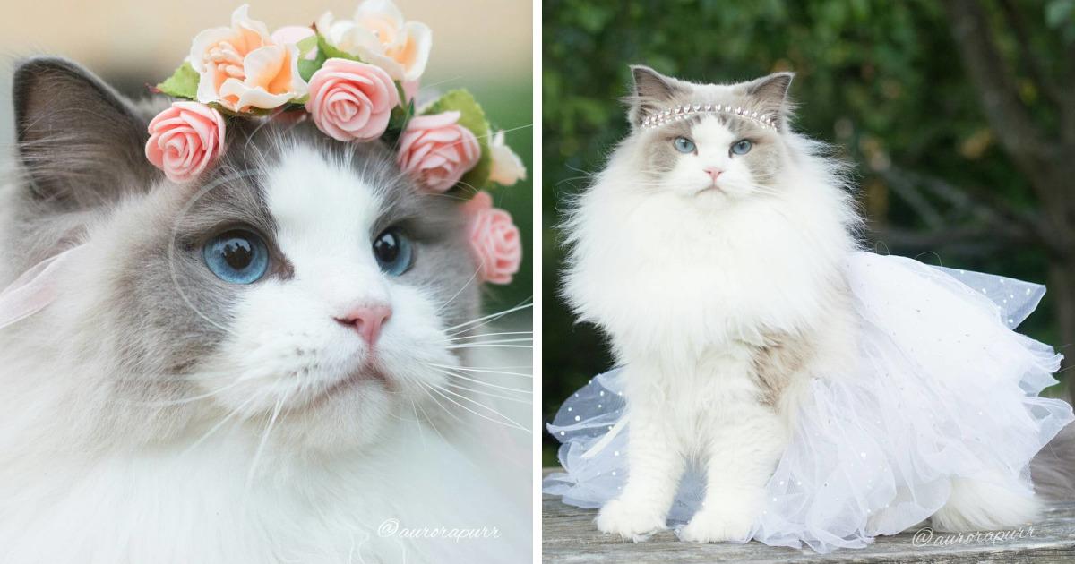 Conheça Aurora, A Gata Princesa Fofa